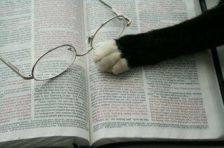 pragmatic cat